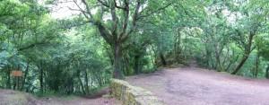 bosque carboeiro