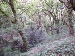 Bosque toxa